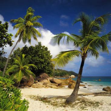 Пальмы у моря