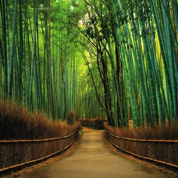 Бамбуковая аллея