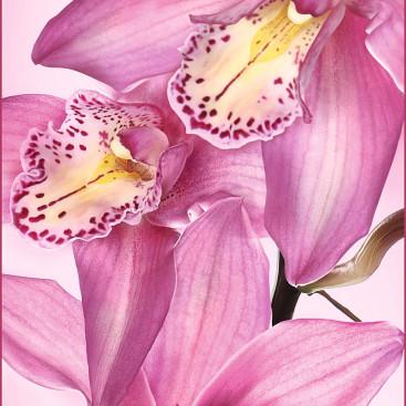 Цветы Афродиты