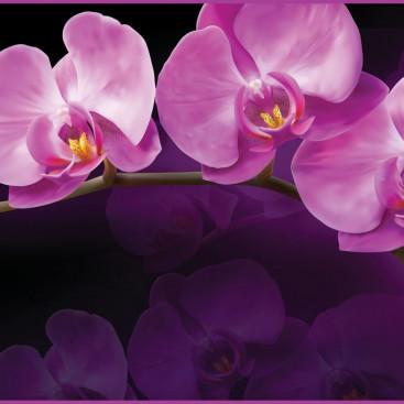 Зеркальная орхидея
